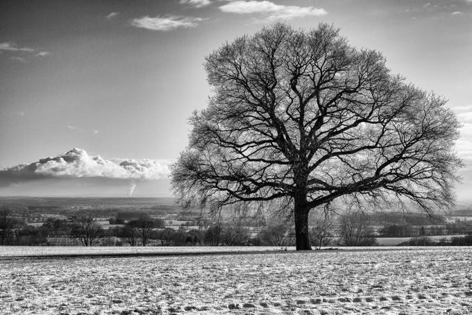 Baum und Wolke_web